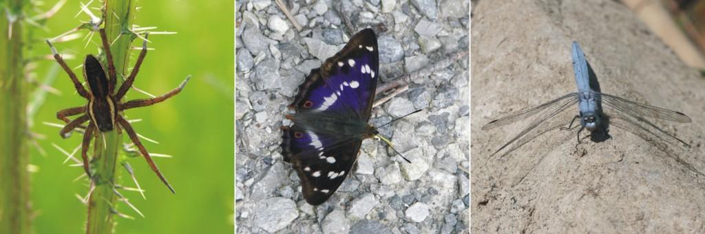Ampelbewertung Planungsrelevanten Arten, FFH, Natura 2000, Insekten, Tagfalter