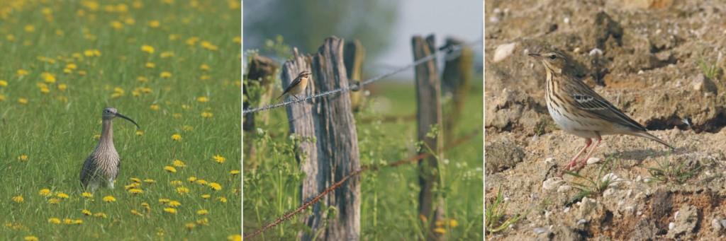 Ampelbewertung Planungsrelevanten Arten, Windenergie, Avifauna