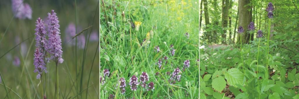 Ampelbewertung Planungsrelevanten Arten, FFH, Natura 2000, Flora und Vegetation