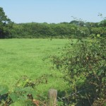 Landgoed de Poll, Natuuronderzoeken, Inrichting en beheer