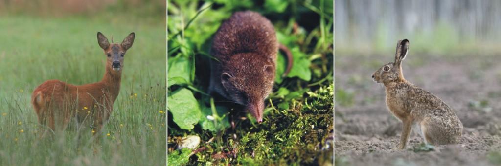 Ampelbewertung Planungsrelevanten Arten, FFH, Natura 2000, Säugetiere