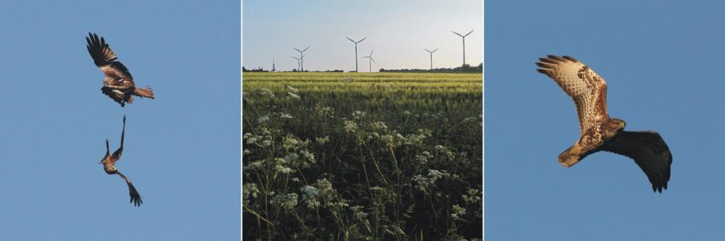 Ampelbewertung Planungsrelevanten Arten, FFH, Natura 2000, Windenergie