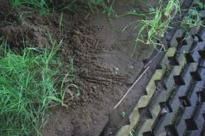 Otter, zoogdieren, aanvullend onderzoek