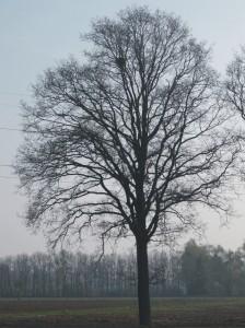 Roofvogels, havik, boomvalk, buizerd, ransuil, jaarrond beschermd, aanvullend onderzoek
