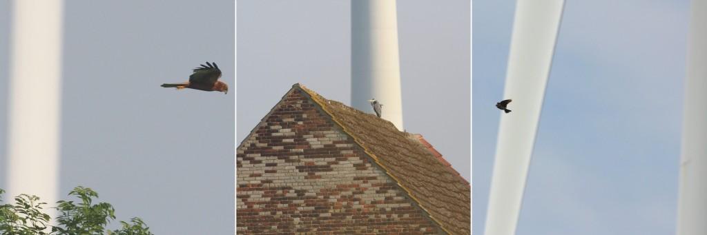 Ampelbewertung Planungsrelevanten Arten, Windenergie, FFH, Natura 2000, Monitoring