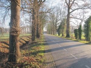 Bomeninspectie, Flora- en faunawet, vleermuizen