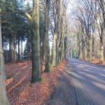 VTA, bomeninspectie, vleermuizen, Staring Advies