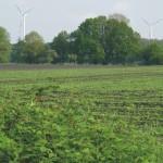 Natuuronderzoek bij windmolens